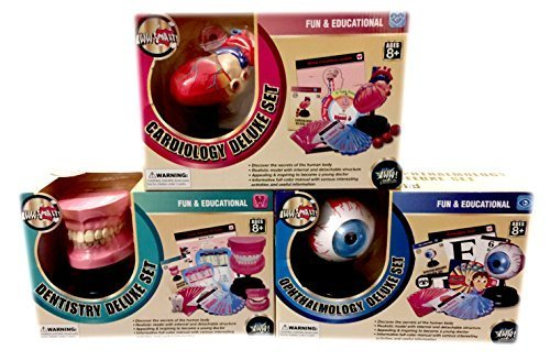 Bundle Set Of 3 Anatomy Education Science Kits Eye, Heart, Teeth