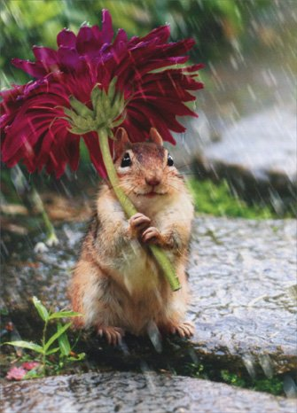 Chipmunk With Flower As Umbrella Get Well Card