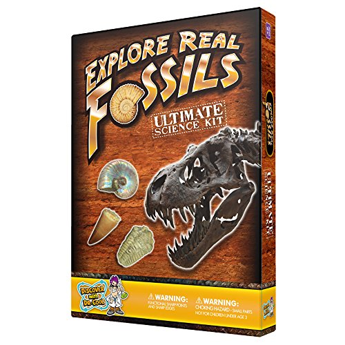 Ultimate Fossil Science Kit  15 Genuine Fossils Including Dinosaur Specimens!
