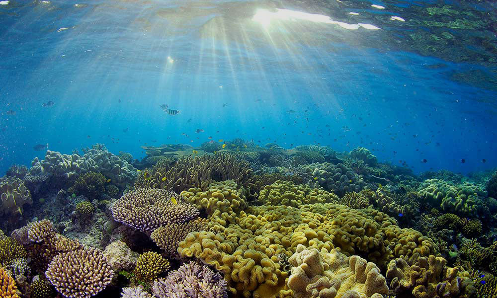WHAT DOES REEF SAFE REALLY MEAN?