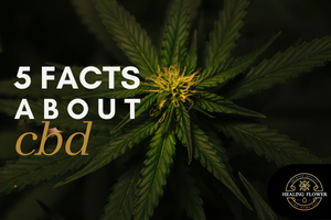 CBD Facts: 5 Things to Know About CBD Oil