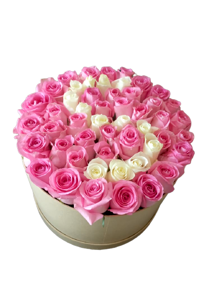 50 Pink and White Roses