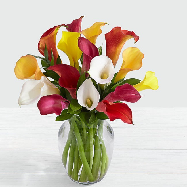 Assorted Mini Calla Lilies - FWR