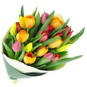 Bright Mixed Tulips - FWR - Arabian Petals
