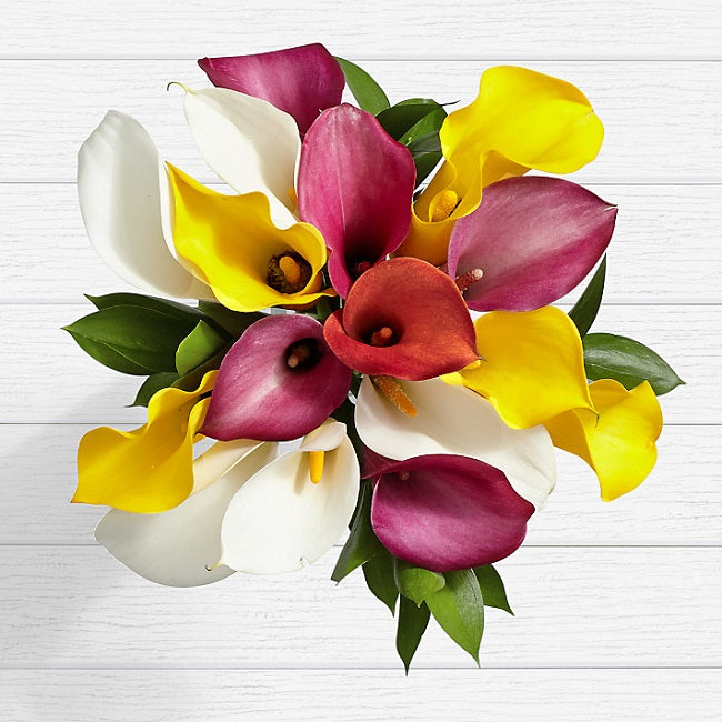 Assorted Mini Calla Lilies - FWR - Arabian Petals