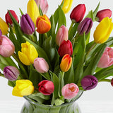 30 Multi-Colored Tulips - FWR - Arabian Petals