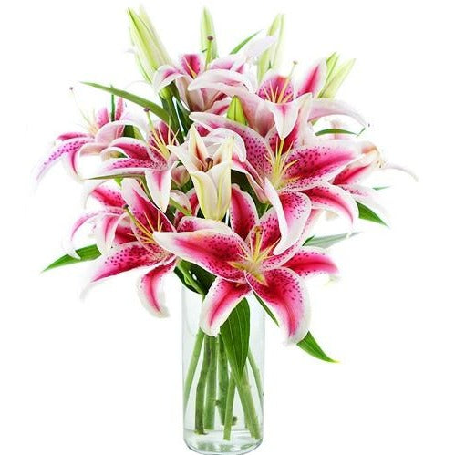 Pink lily flowers in vase