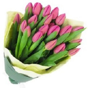 Pink Tulip Bunch - FWR