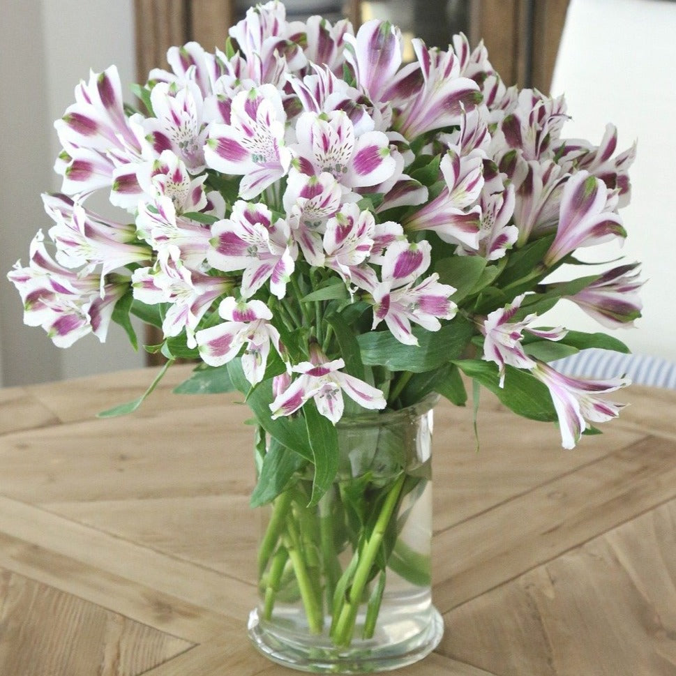 Purple and White Alstroemeria