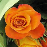 Orange Roses - FWR - Arabian Petals
