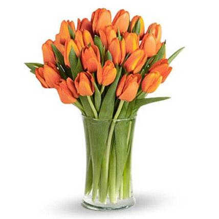 Orange Tulip Collection - FWR - Arabian Petals