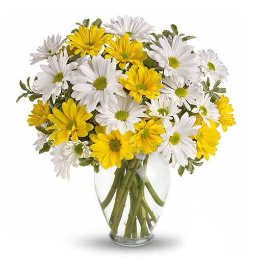 Cheerful Daisies - FWR