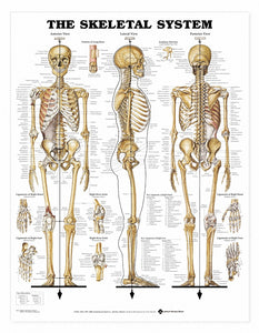 Vintage about The Skeletal system Posters Kraft Paper Painting Wall Sticker Print Art Hospital Classrooms Interior Decoration m