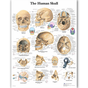 WANGART Human Anatomy Chart Poster Map Canvas Painting Wall Pictures for Medical Education Doctors Office Classroom Home Decor