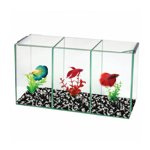 Betta Trio Cube Glass W Lid 36x12x20cm