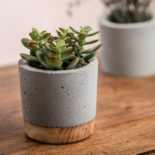 Cement and wood combination plant pot