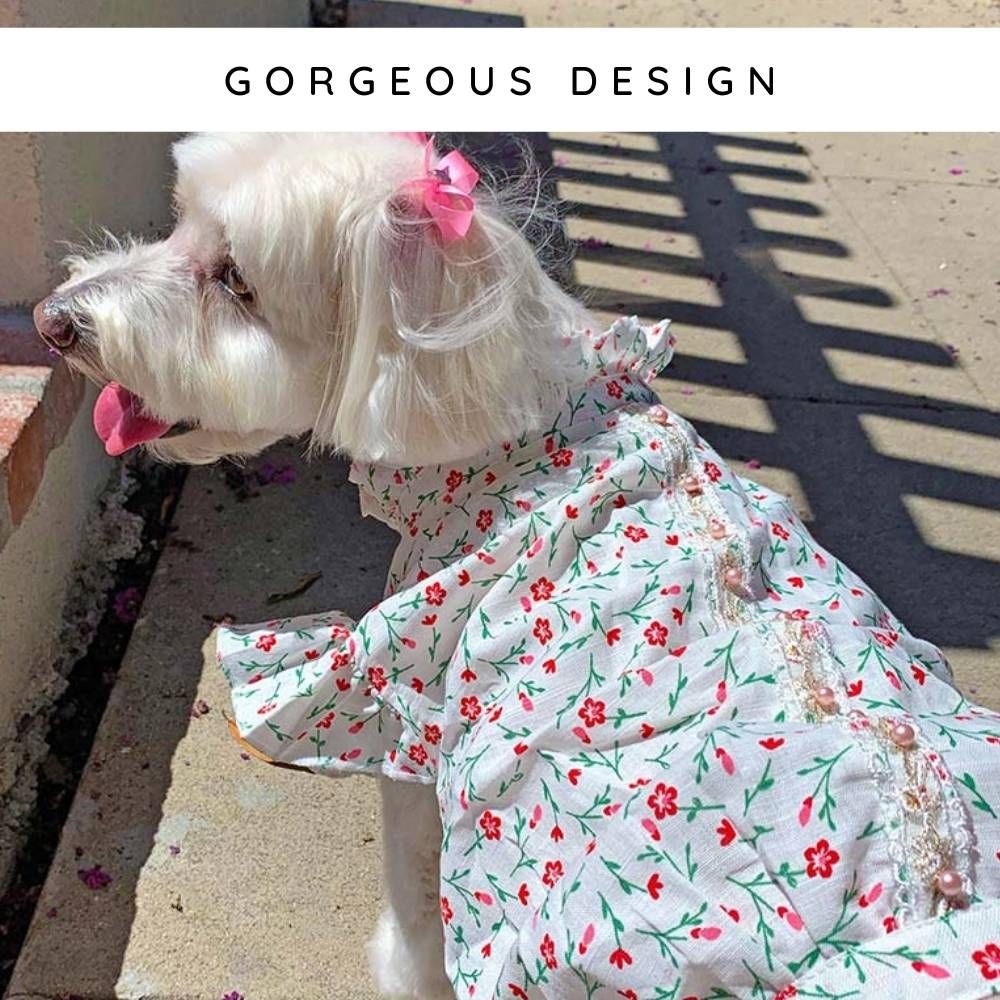 Bichon Frise, Maltese & Havanese Mix wearing the Pink Daisies Dog Blouse from online dog clothing store they made me wear it.