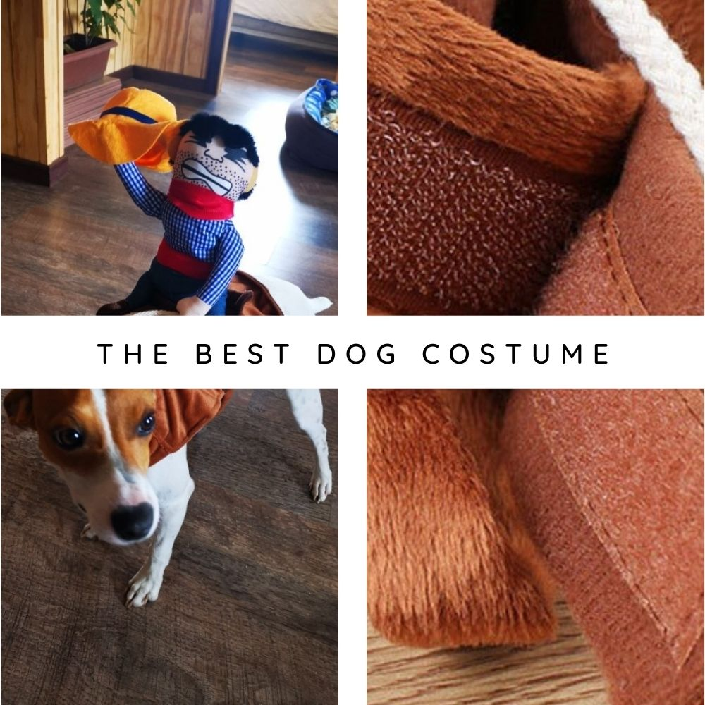 White and brown Jack Russell Terrier wearing Ride 'Em Cowboy Dog Costume from they made me wear it.