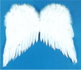 ACCESS: Wings, White Feather
