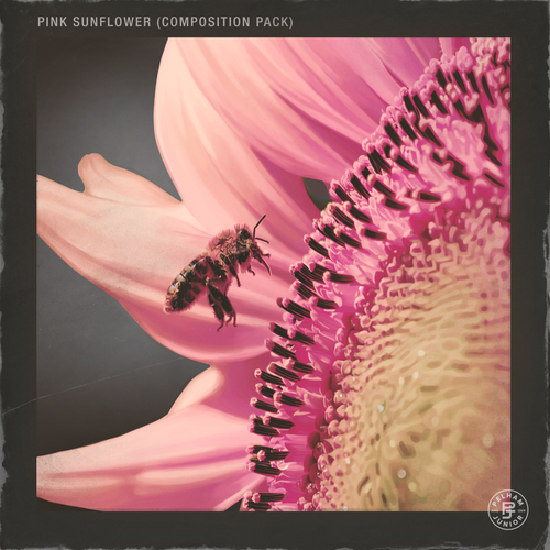 Pink Sunflower Volume 1