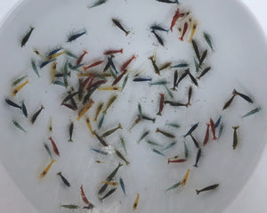 Assorted Neos Shrimp - Males (Pack of 5)