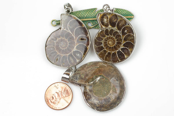 Fossilized Sliced Ammonite with White Gold bezels- 30mm