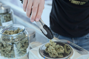 Can You Work in Colorado's Cannabis Industry: Reviewing New Licensing Laws
