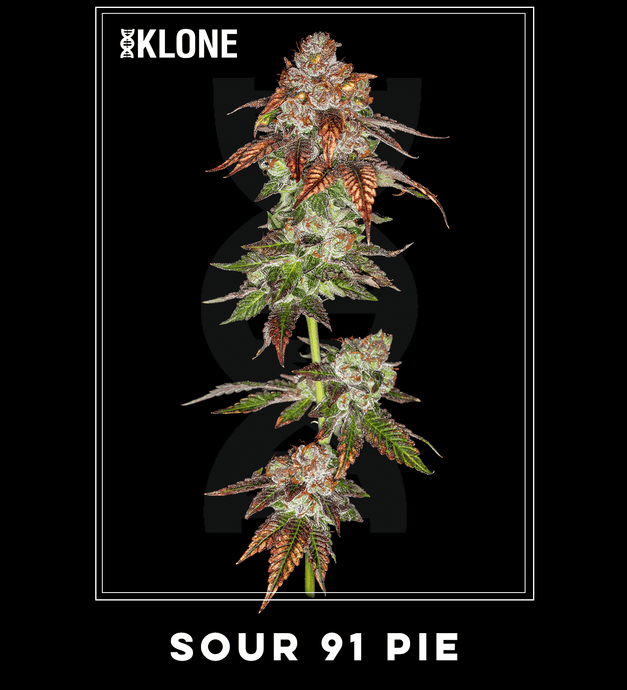 NEW Sour91 Pie #3