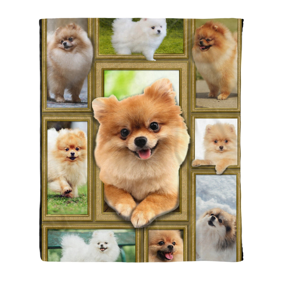 Pemola - Pomeranian Dogs Fleece Blanket, animal blankets, blanket gift, pictures of pomeranians