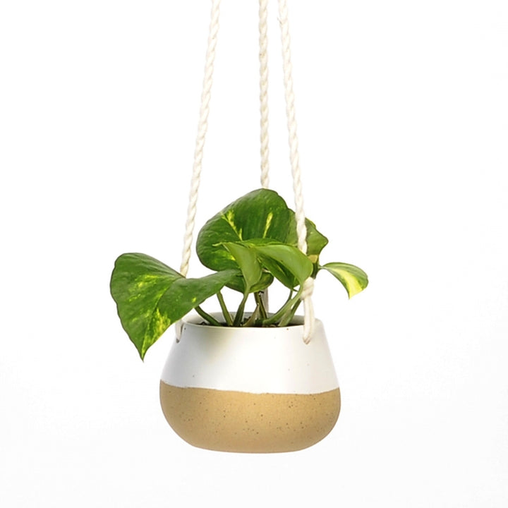 Hanging Pot - Small