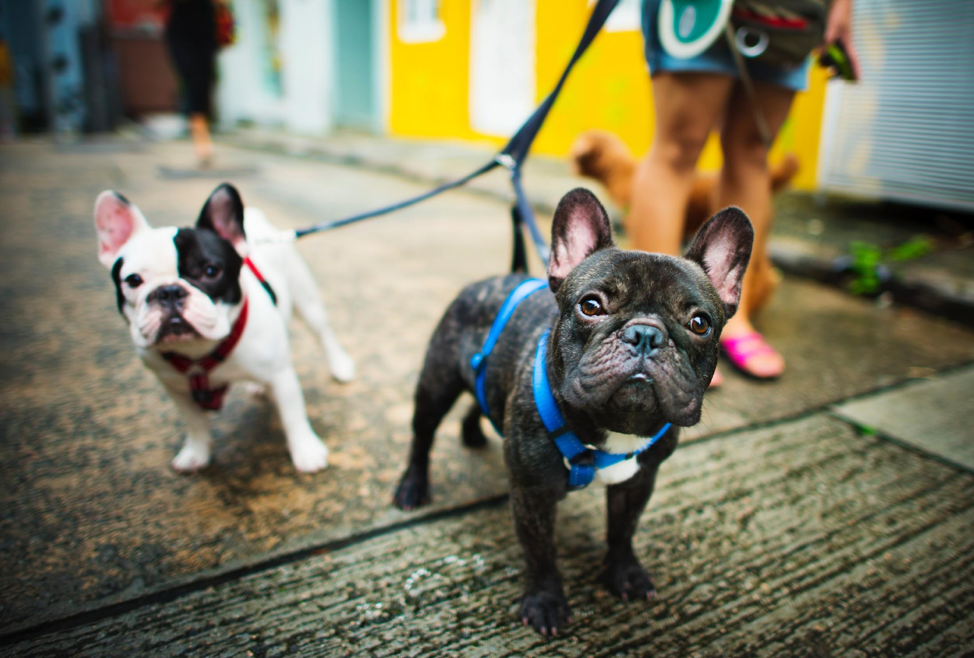 Polite Leash Walking Tips For Dog Walking