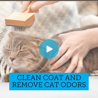 Ready made solution for making your own natural cat wipes