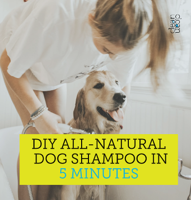 DIY all natural Pet Shampoo in 5 minutes