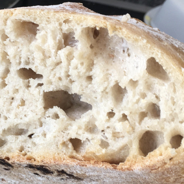 Organic white sourdough boule - Sole Bay Sourdough