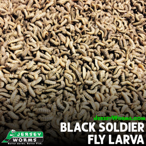 Black Soldier Fly Larva - Jersey Worms