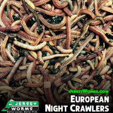 Load image into Gallery viewer, European Night Crawlers - Jersey Worms