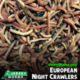 European Night Crawlers - Jersey Worms