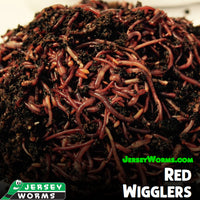 Red Wigglers for sale - Jersey Worms