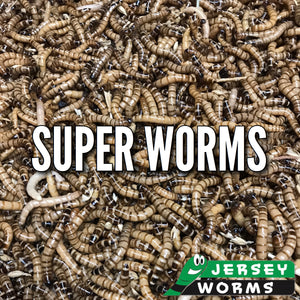 Super Worms