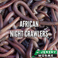 African Night Crawlers | Worms for Composting