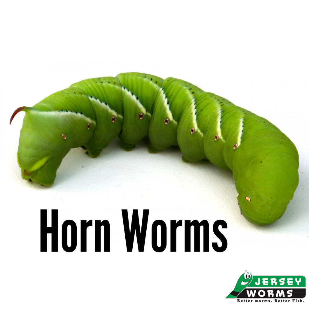 Horn Worms