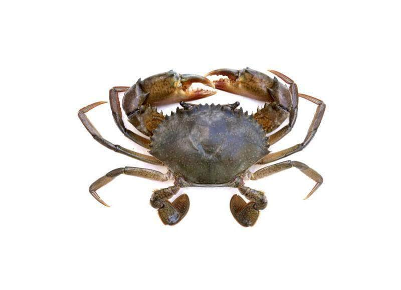 habibseafood habibseafood Mud Crab Per kg