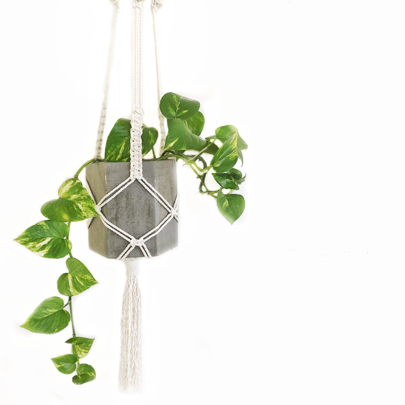 "Beginner Friendly ""Plant Hanger"" Pattern"