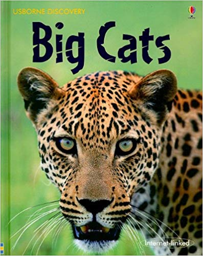 Big Cats Usborne Discovery (New) - Little Green Schoolhouse Books