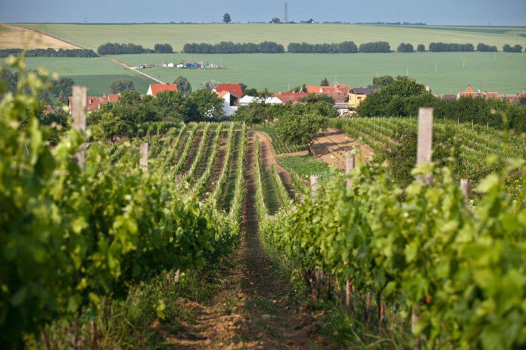 Wine of the Czech Republic-Turton Wines