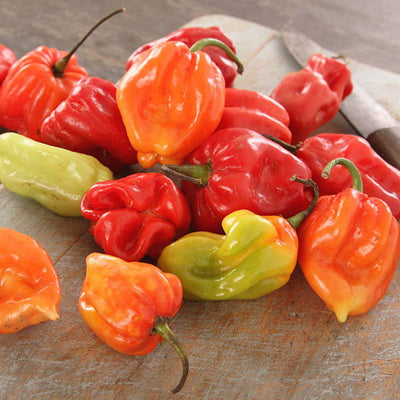 HABANEROS ARE HOT TO TROT!