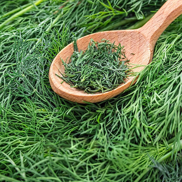 High Quality Organics Express Dill Weed Herbs