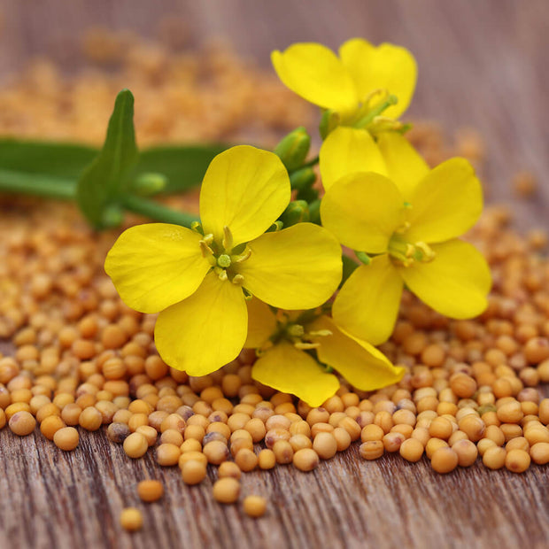 High Quality Organics Express Mustard Seed Ground with mustard flower