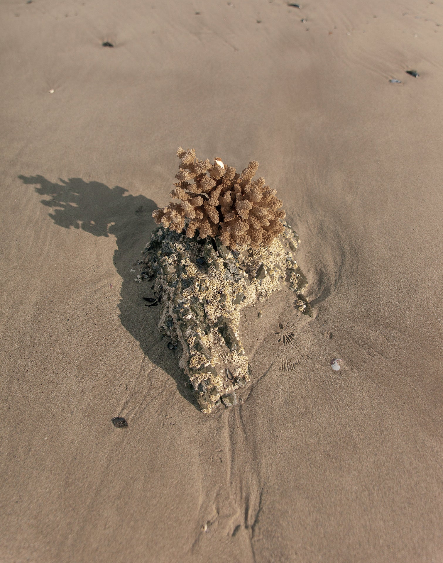 Theodore Afrika - Still Symmetry 10 - Print of some coral on the beach that looks like it might be a face of a creature.