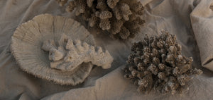 Theodore Afrika - Still Symmetry 09 - Print of a coral still life on the beach.